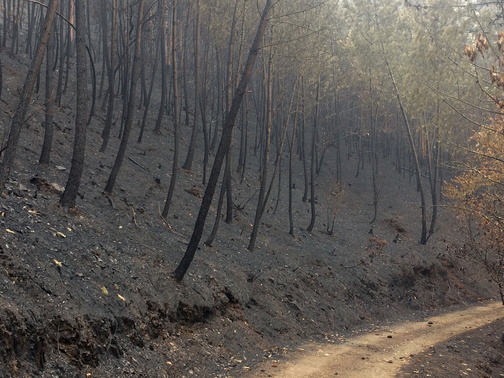 Quinta do Vale's pine woodland after the fires of October 2017